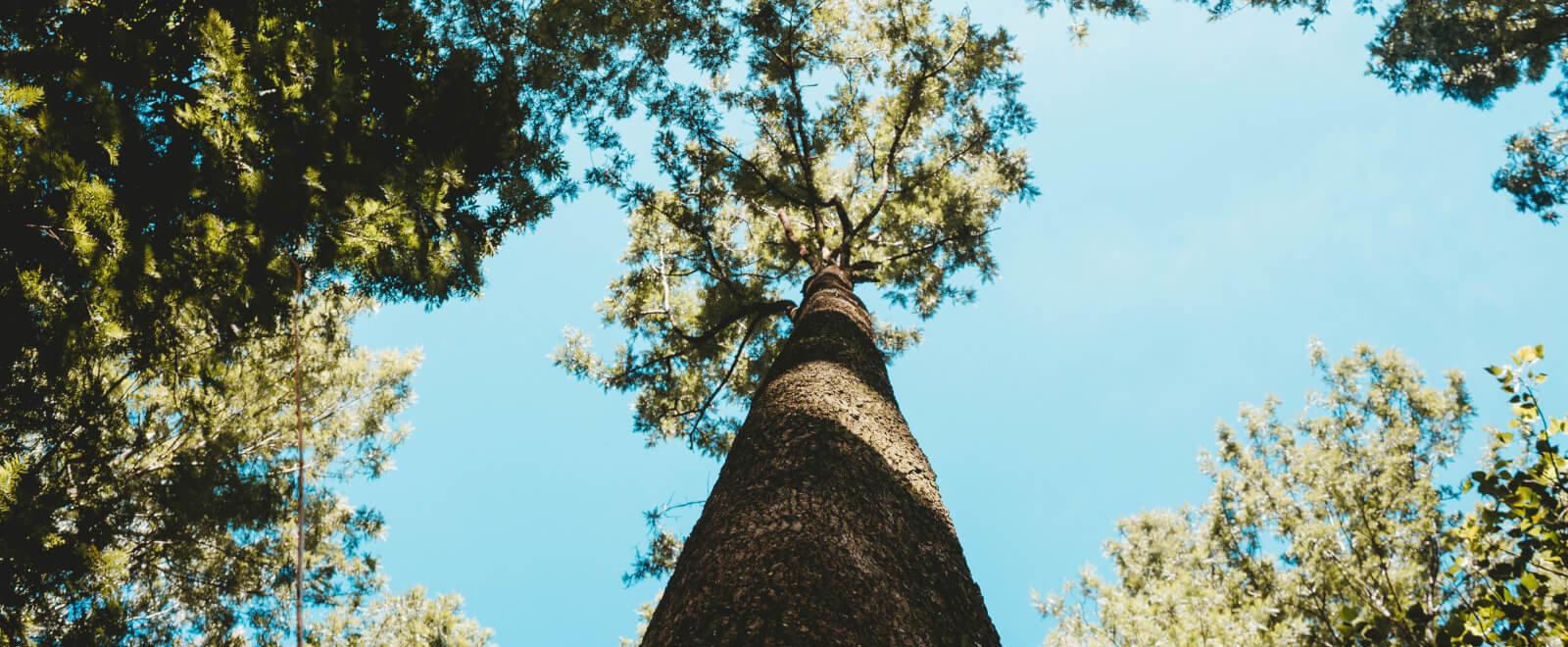 Hoge bomen vangen veel wind; zorg als bestuurder voor stevige wortels!